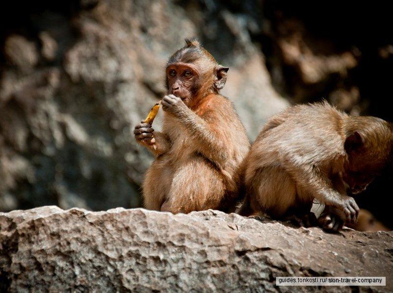 Национальный парк Као-Сок и озеро Чео-Лан (бунгало), 2 дня. Сезон 2019-2020