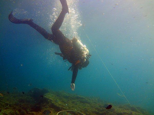 Дайвинг в открытом море в Геленджике