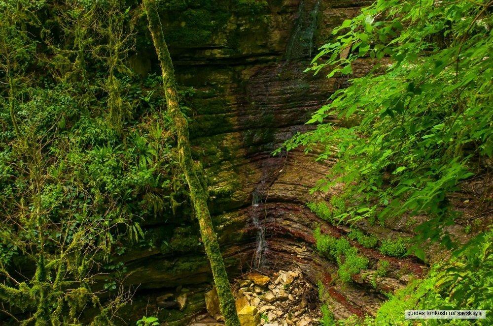 Тисо-самшитовая роща и каньон Чертовы ворота