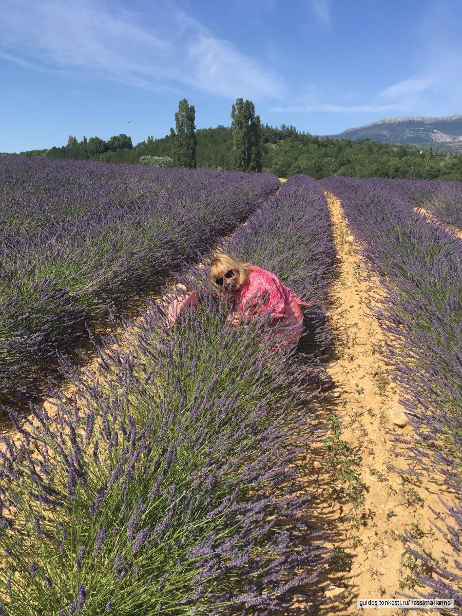 Нобъятные поля чарующей лаванды в Провансе