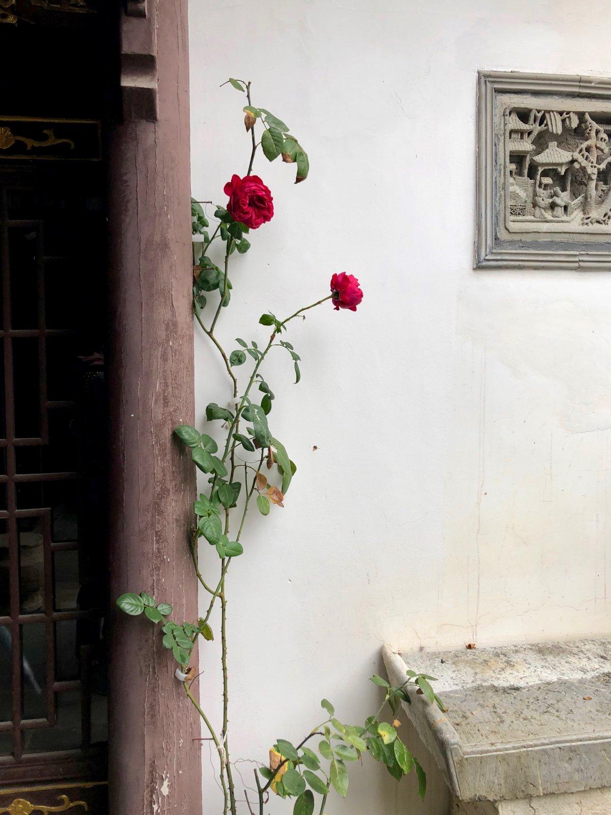 Китайская «Венеция» — деревня на воде Чжуцзяцзяо