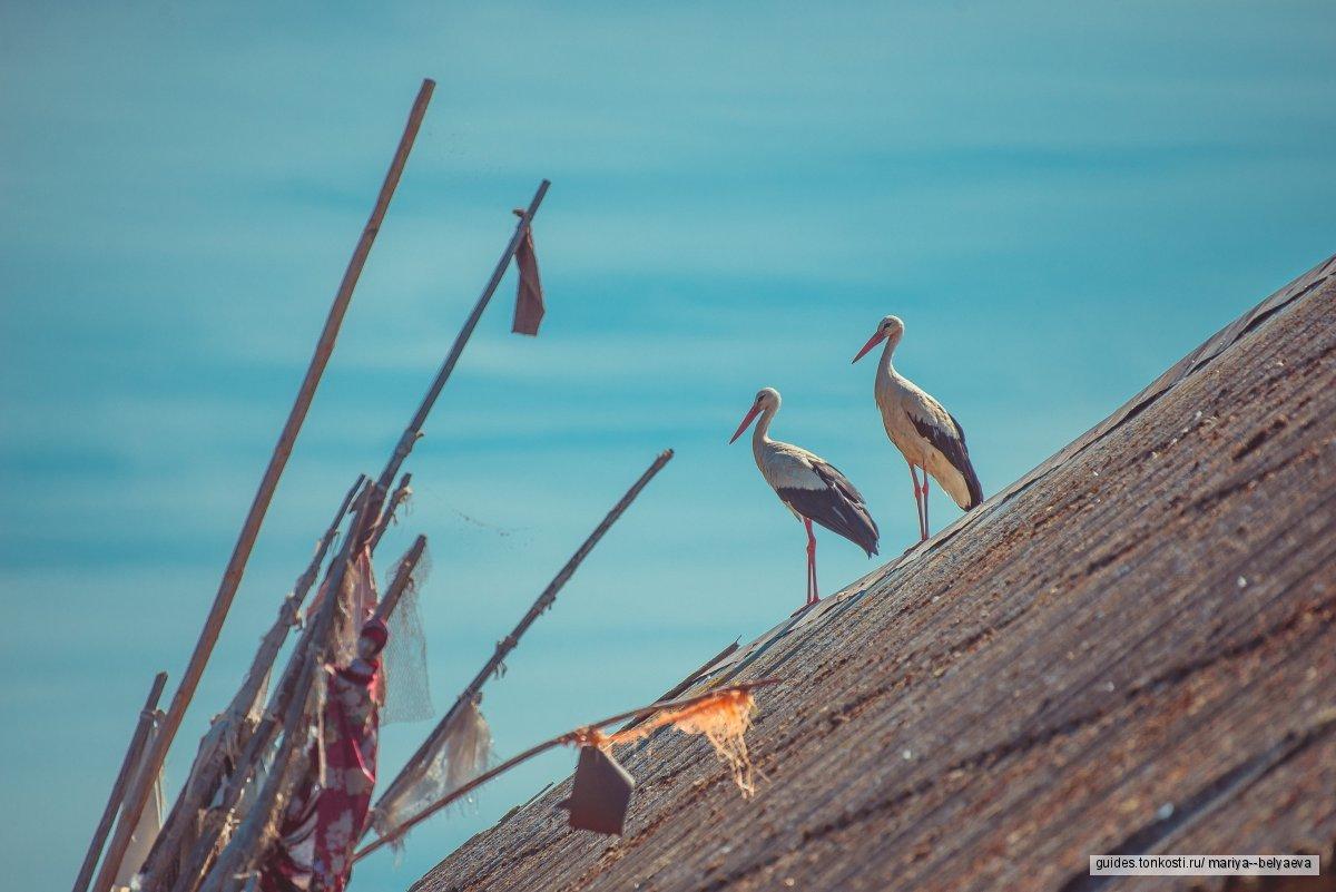 Индивидуальная экскурсия на Талабские острова