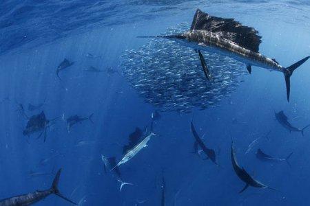 Карибская рыбалка