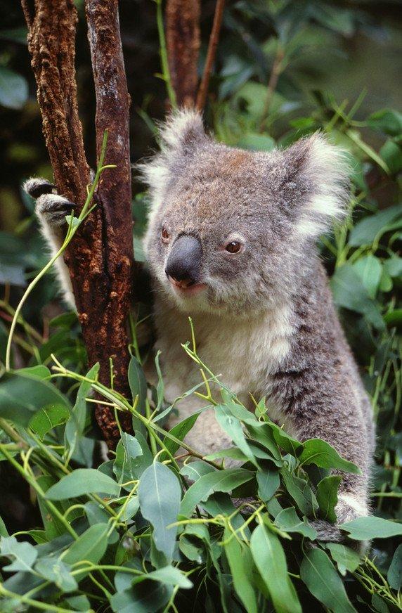 Обзорная экскурсия по Мельбурну + парк Данденонг + остров Филлипа и Парад пингвинов