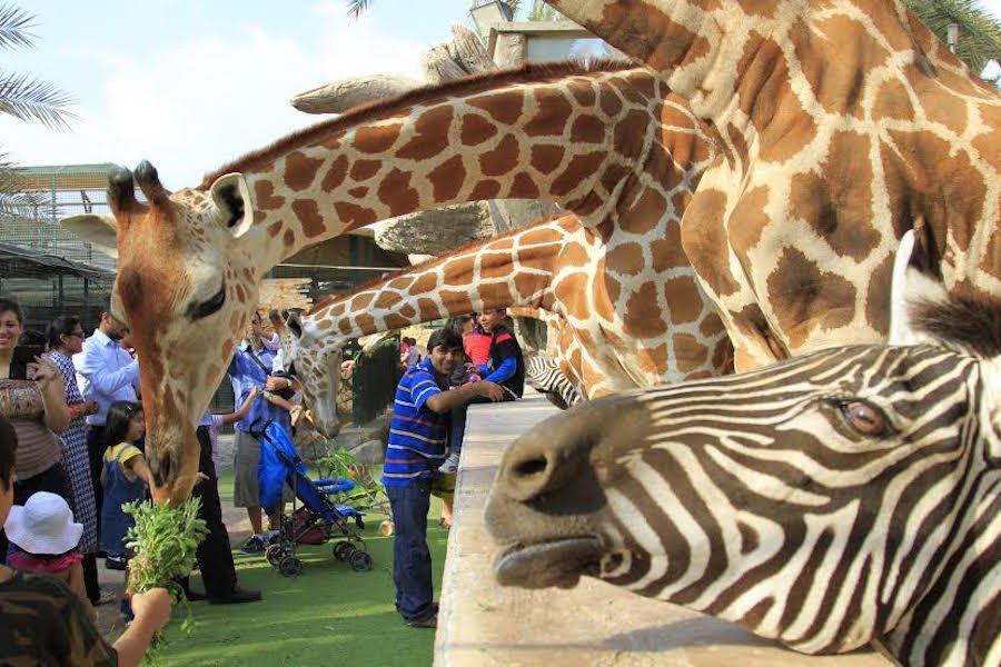 Dubai Safari Park — Зоопарк Дубай Сафари Парк