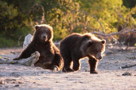 Наблюдение за медведями. Вертолетный тур на Курильское озеро.
