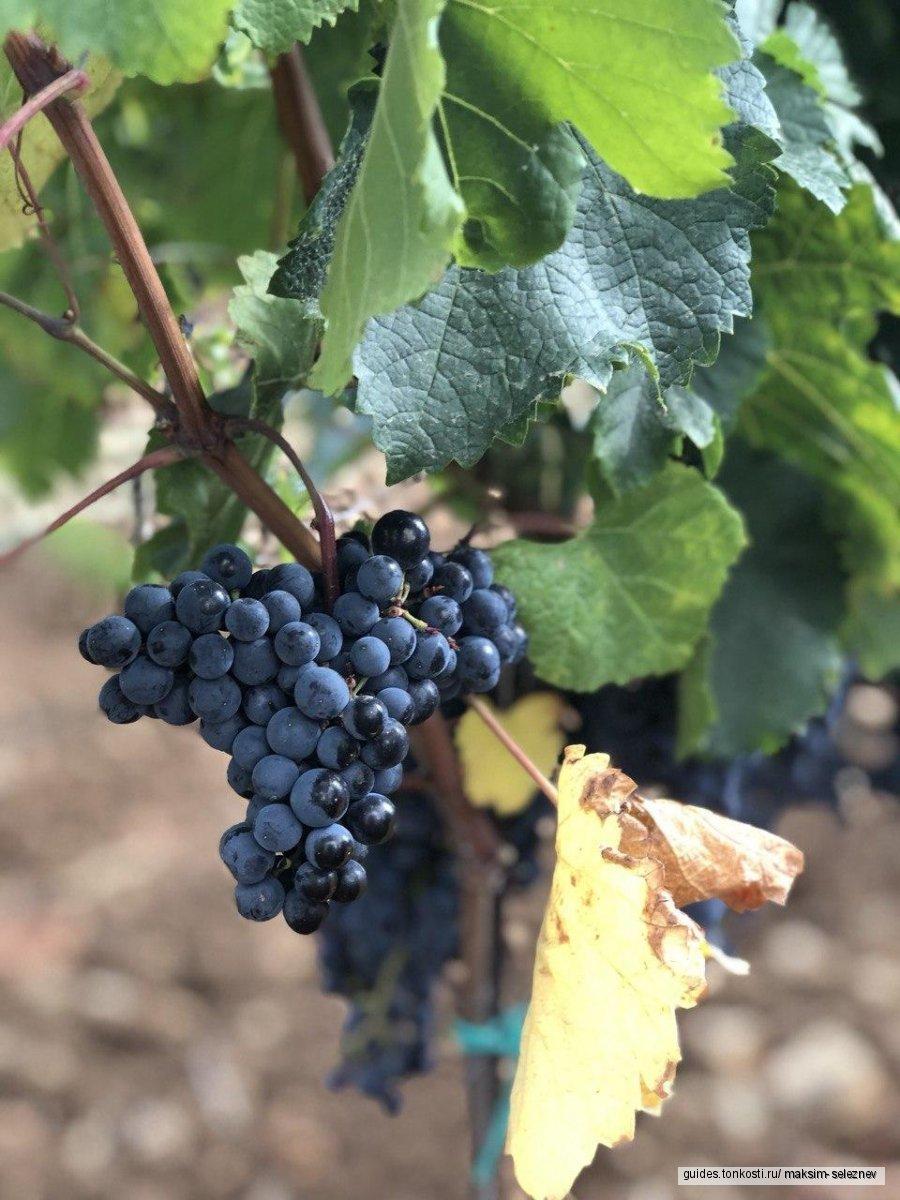 Индивидуальный винный тур по Кубани