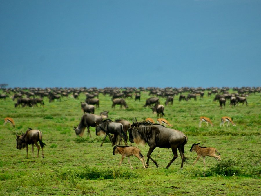 Сафари в Танзании по северному кольцу