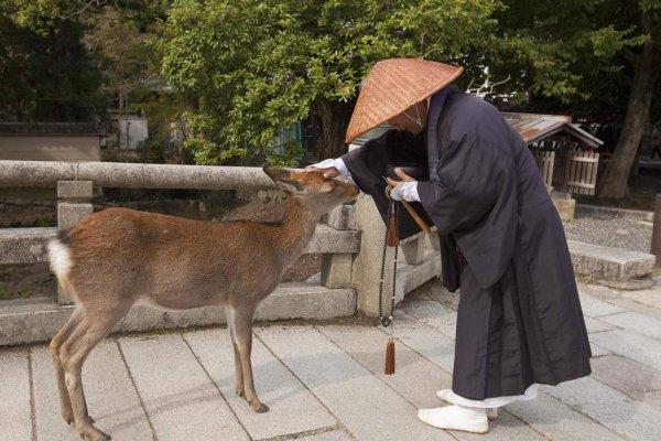 Нара — древняя столица Японии