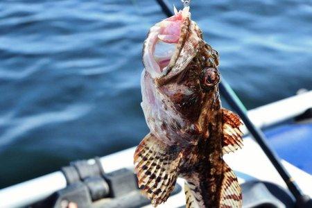 Рыбалка в Сочи на яхте