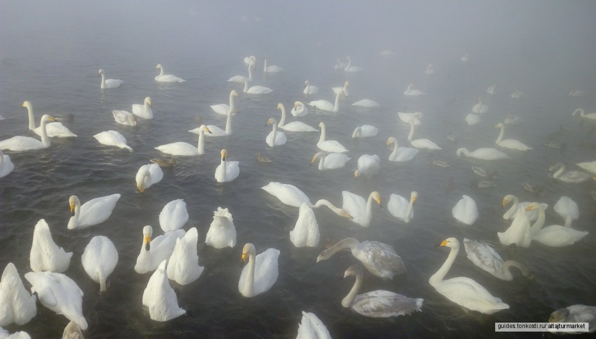 Зимний тур «Подзарядка на Алтае»