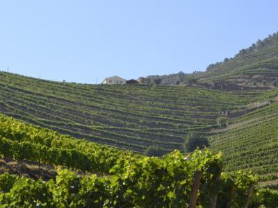 Экскурсия к виноделам на родину портвейна — долина Дору
