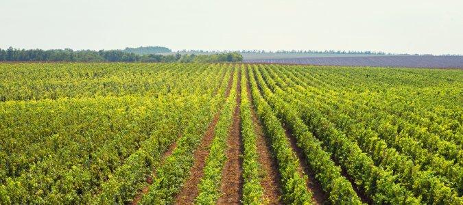 Экскурсия на винодельню «Эльбузд» с дегустацией вин