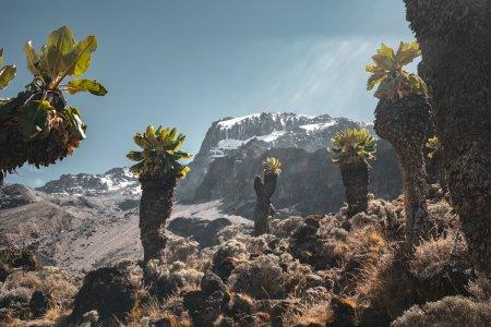 Восхождение на Килиманджаро — Лемошо 8 дней