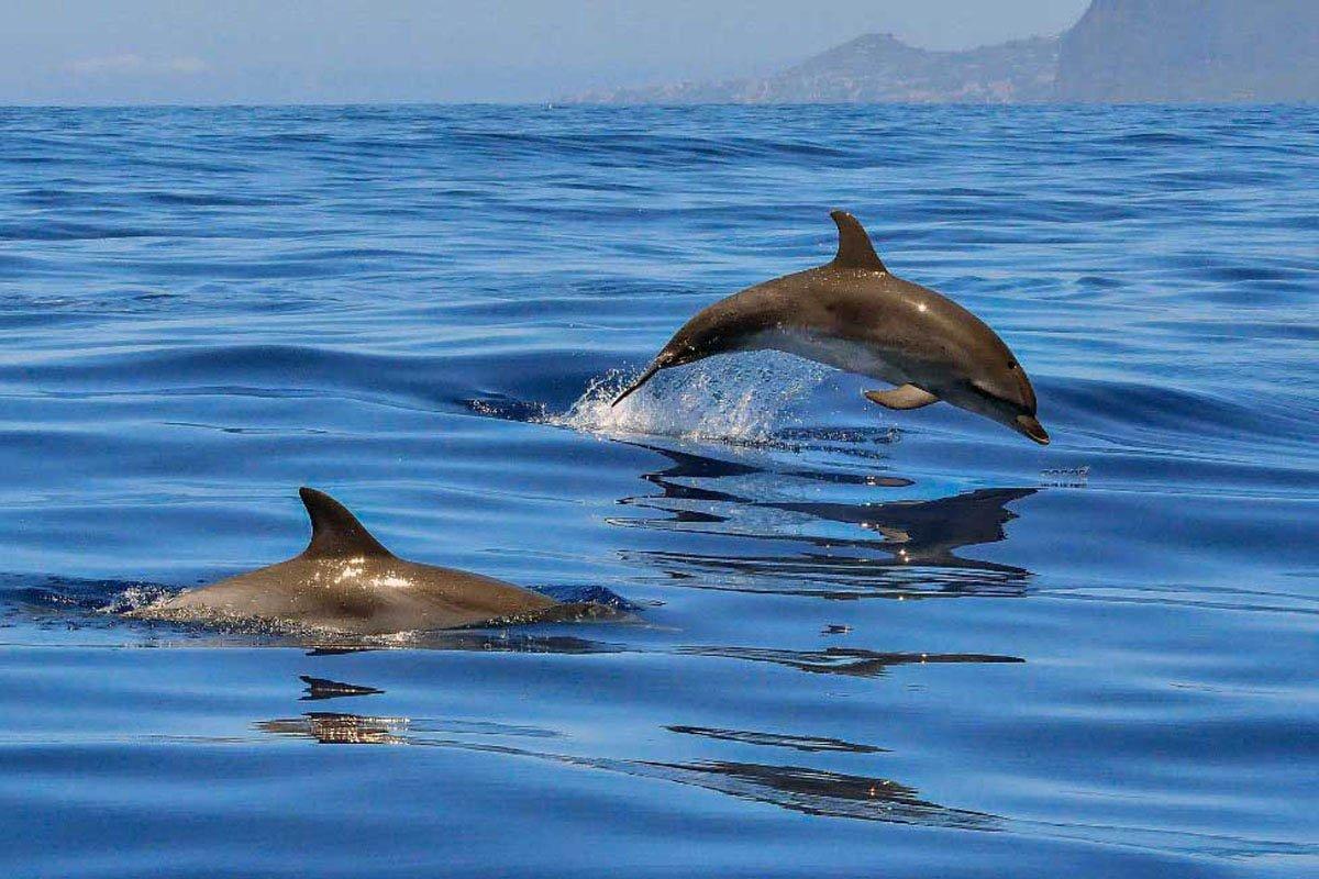 Авторский морской тур в «Гости к дельфинам»