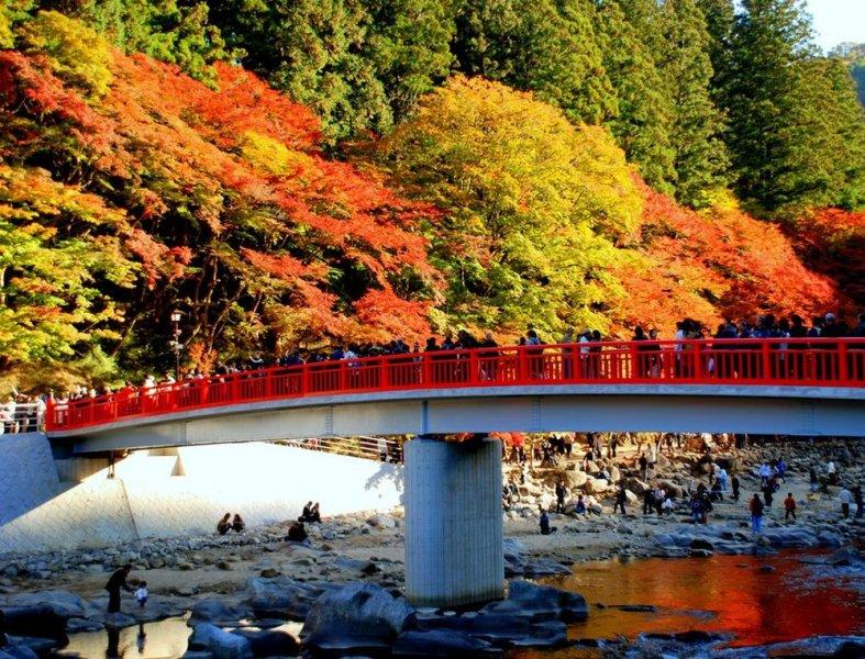 Осенний тур. Любование красным клёном