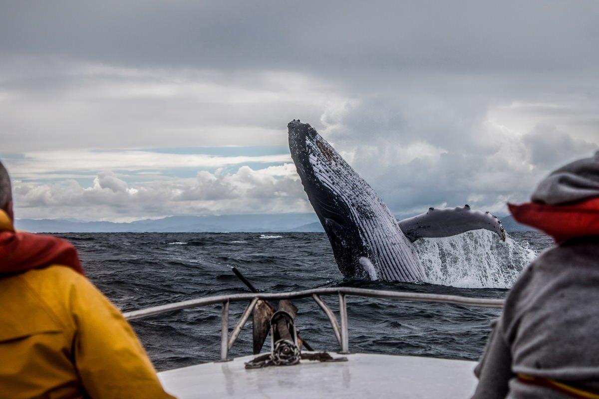 Навстречу китам и косаткам
