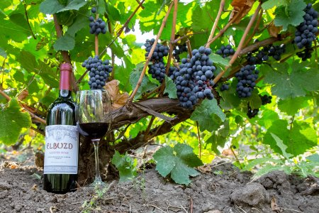 Дегустация донских вин