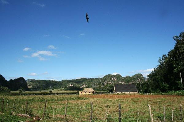 Табачные плантации Пинар-дель-Рио и долина Виньялес