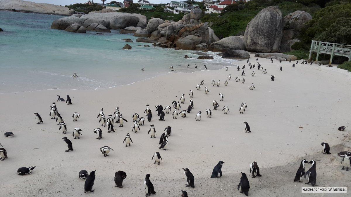 Мыс Доброй Надежды и пингвины
