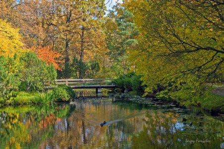 Царство гармонии: Розарий и Японский сад