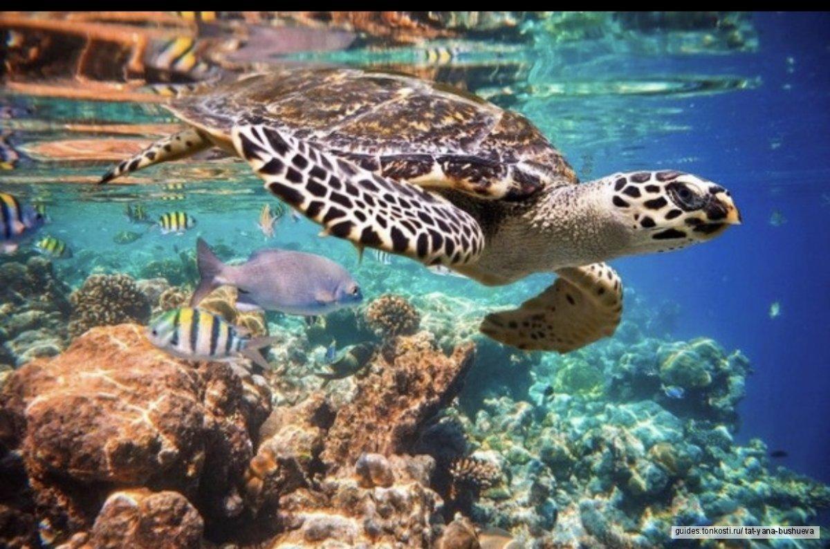 Плавание с черепахами