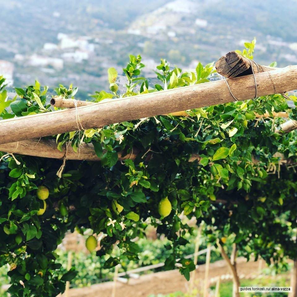 Экскурсия на лимонную плантацию Амальфи с дегустацией сладостей