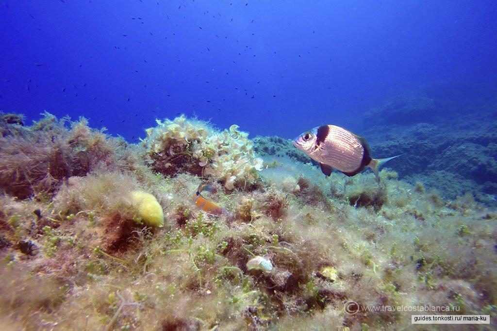 Табарка — пиратская база и биосферный заповедник