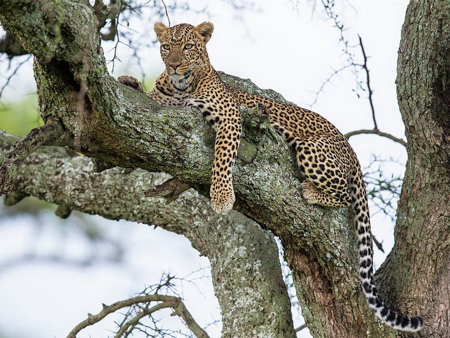 Сафари в Танзании по южному кольцу