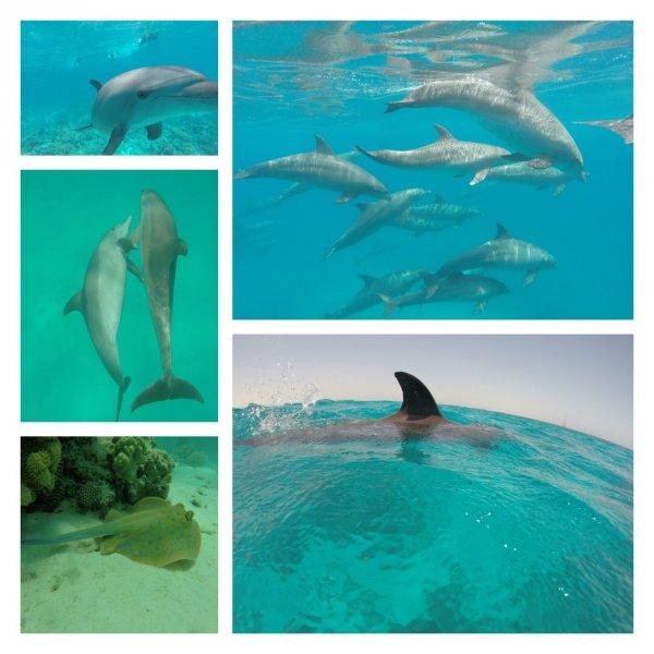 Хургада экскурсия Дом дельфинов
