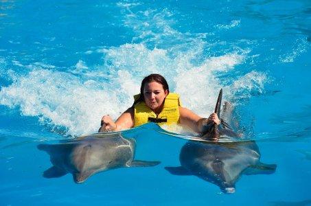 Плавание с дельфинами из Шарм-эль-Шейха