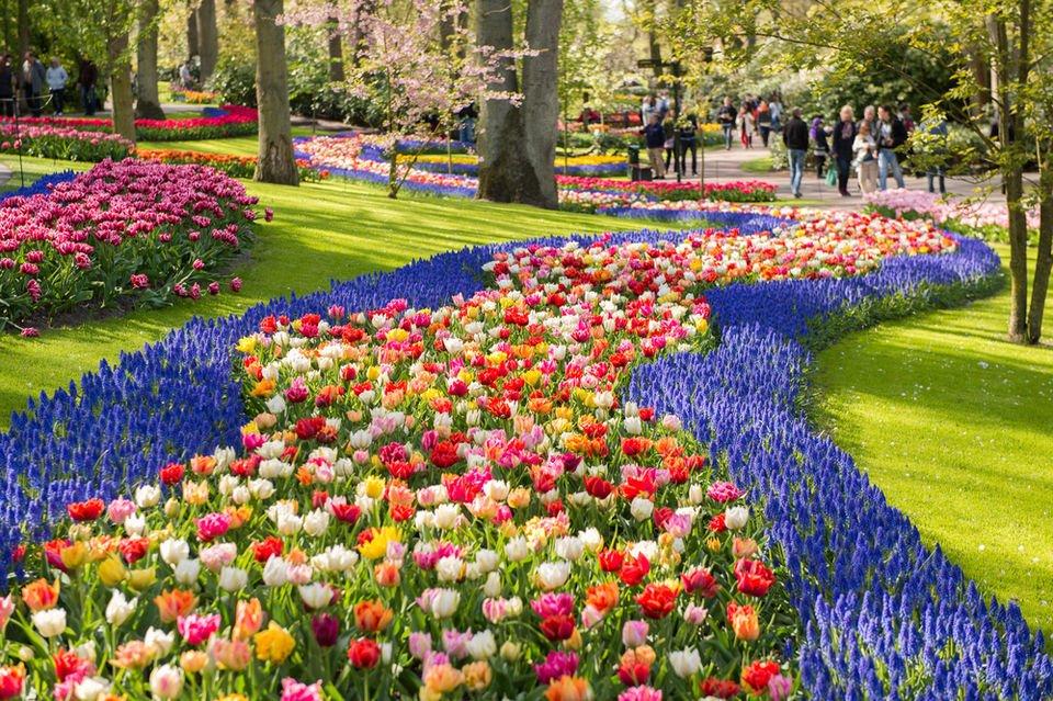 Цветочный рай Кёкенхоф