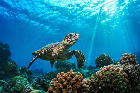 Плавание со стаями сардин, черепахами, Каньонинг, Водопады Кавасан + Ланч