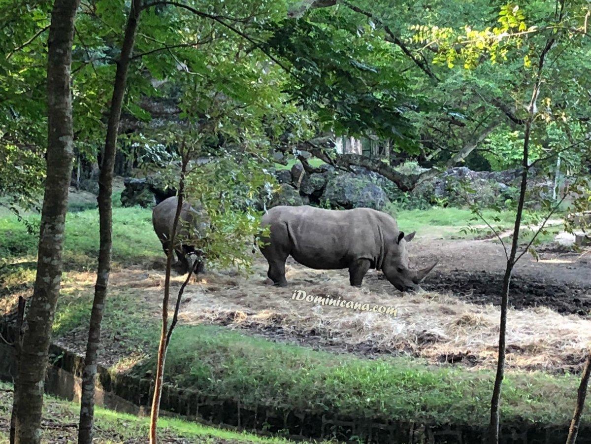 Санто-Доминго + зоопарк (до 10 чел.) — 130 USD