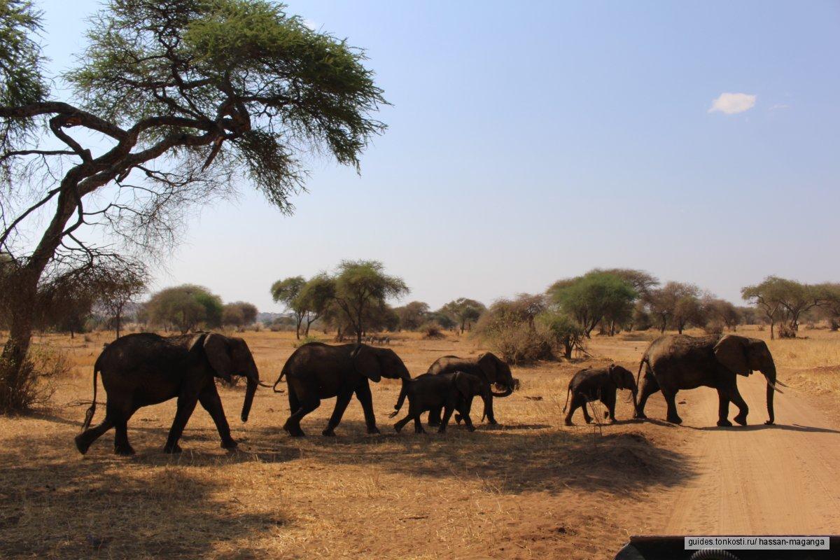 Сафари тур из Занзибара в парках Тарангире и Нгоронгоро