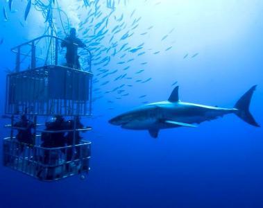 Погружение с акулами