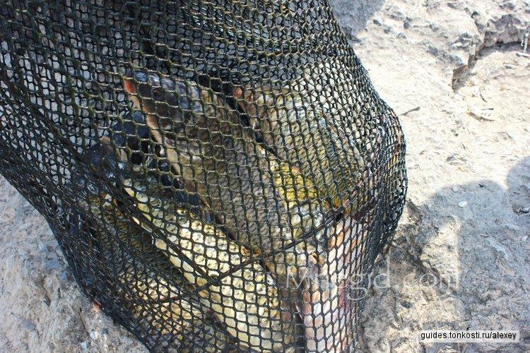 Рыбалка на Скадарском озере
