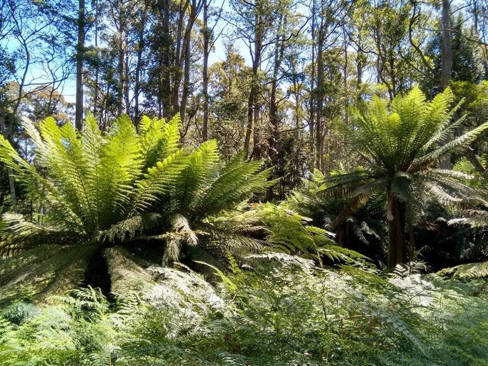Экскурсия из Хобарта по Тасмании: национальный парк Маунт-Филд