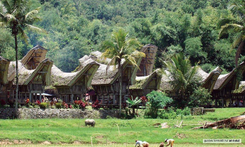 Тана-Тораджа — царство мертвых