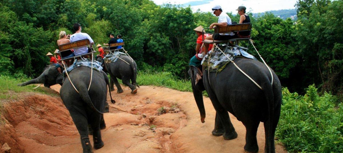 Катание на слонах на Пхукете. Сезон 2019-2020