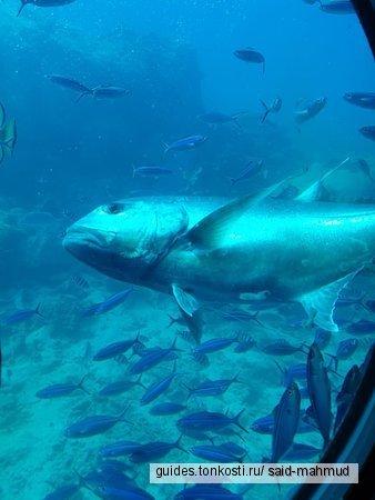Подводная лодка Sindbad из Хургады