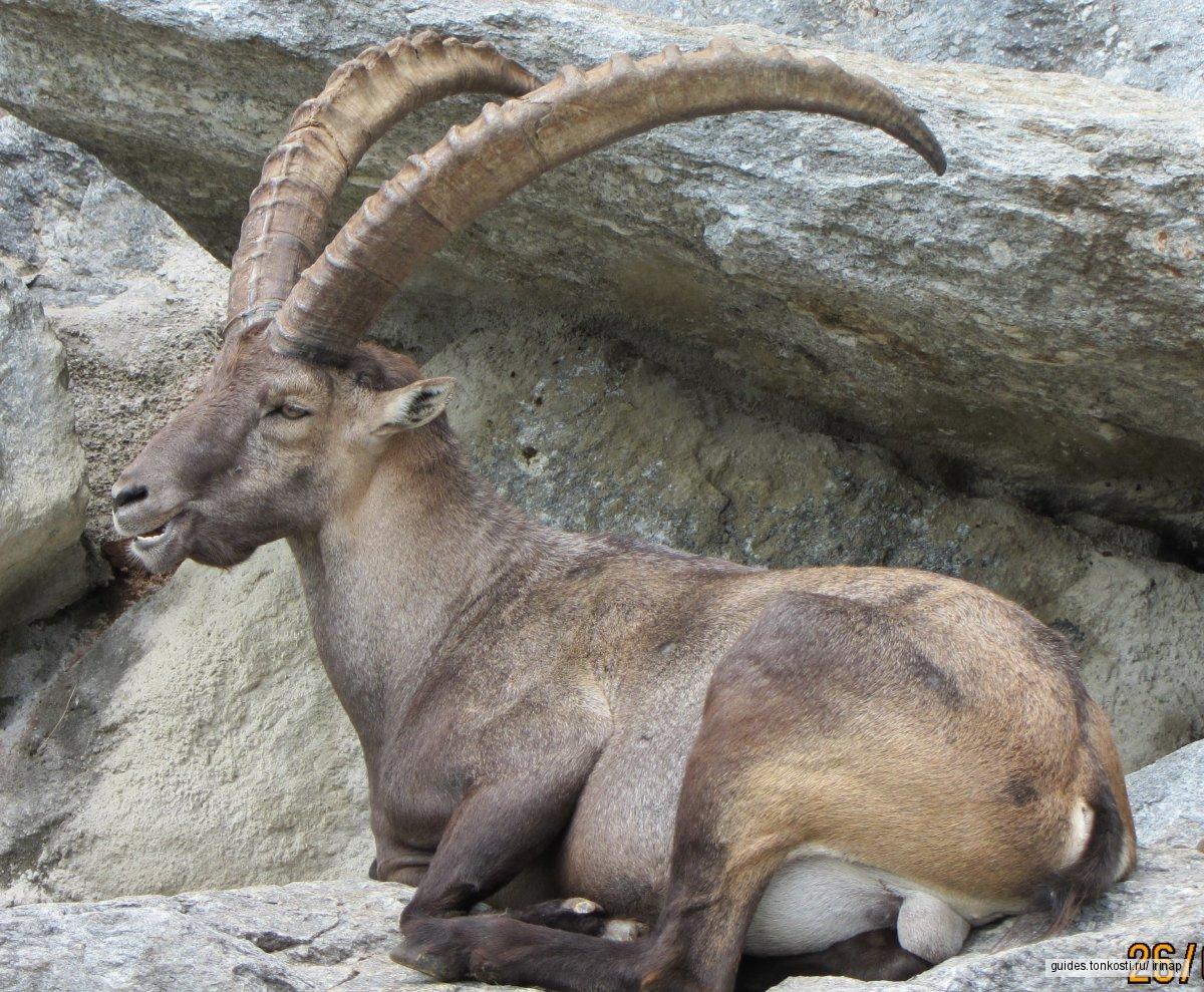 Инсбрук на ладони — экскурсия в горы на фуникулере