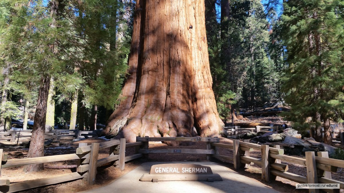 Национальный парк «Секвойя» — однодневный тур из Лос-Анджелеса