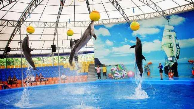 Дельфинарий на Пхукете (Phuket Dolphin show)