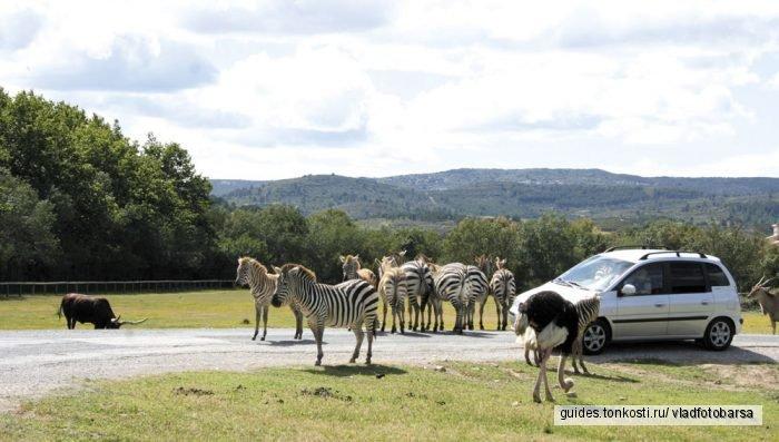 Франция:сафари -парк в Сижане и обед на устричной ферме