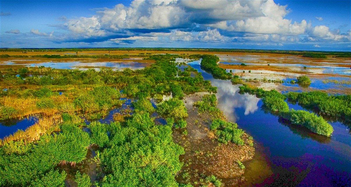 Заповедник Эверглейдс — дикая природа Флориды