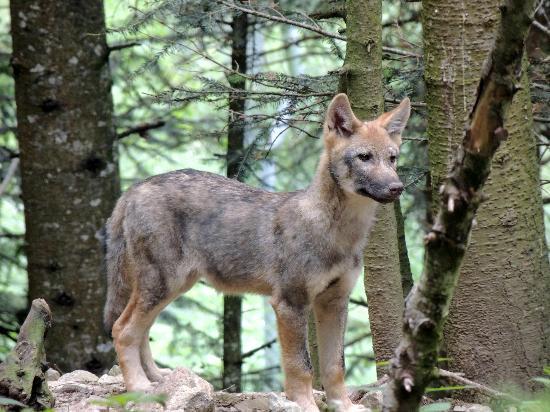 Ницца — Лазурная Швейцария. Парк волков