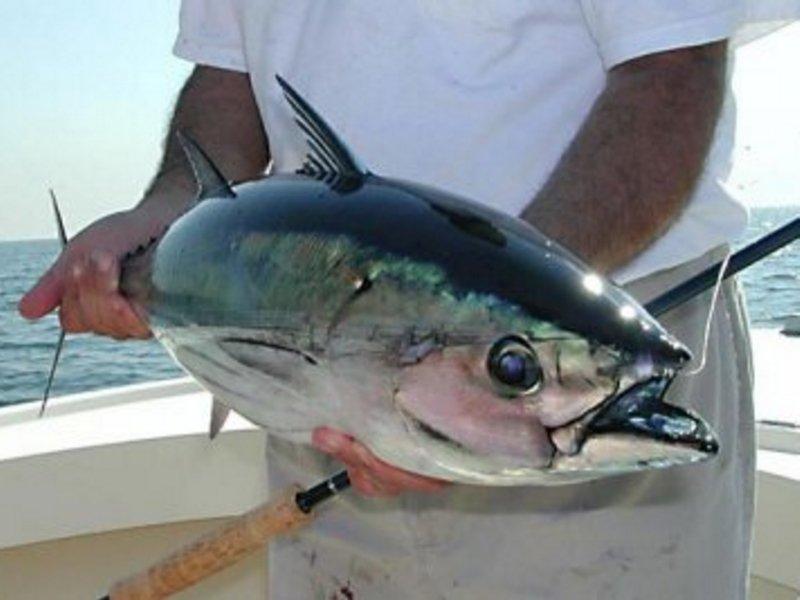 Индивидуальная морская рыбалка. Сезон 2019-2020