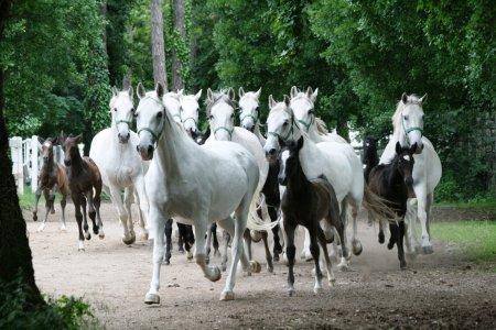 Шкоцянские пещеры (UNESCO) и племенной конный завод Липица, авто-пешеходная экскурсия