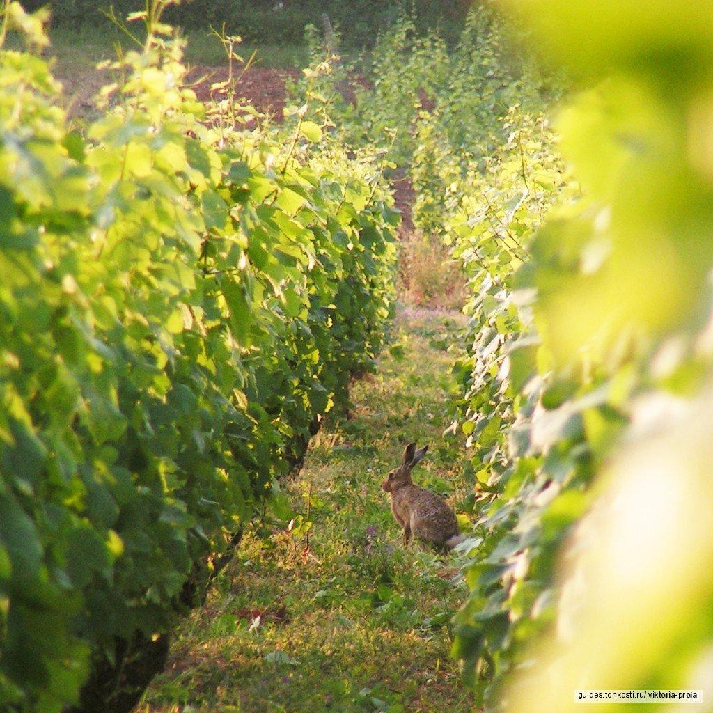 Биодинамика по дороге Великих вин в Бургундии